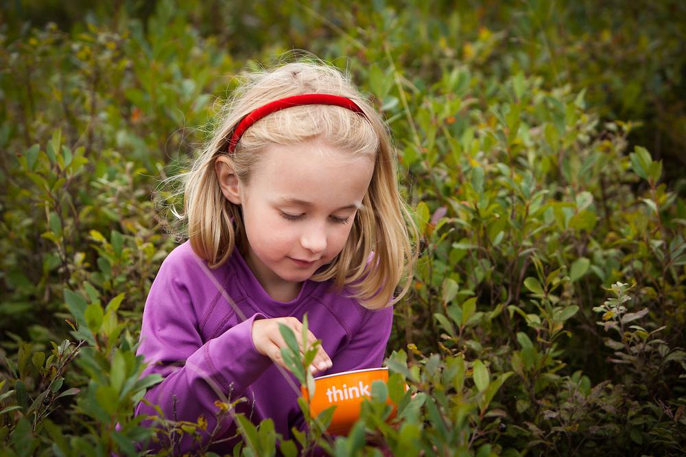 Addy Budliger (6) picking wild blueberries on Coney Mtn., Adirondack Park, New York
