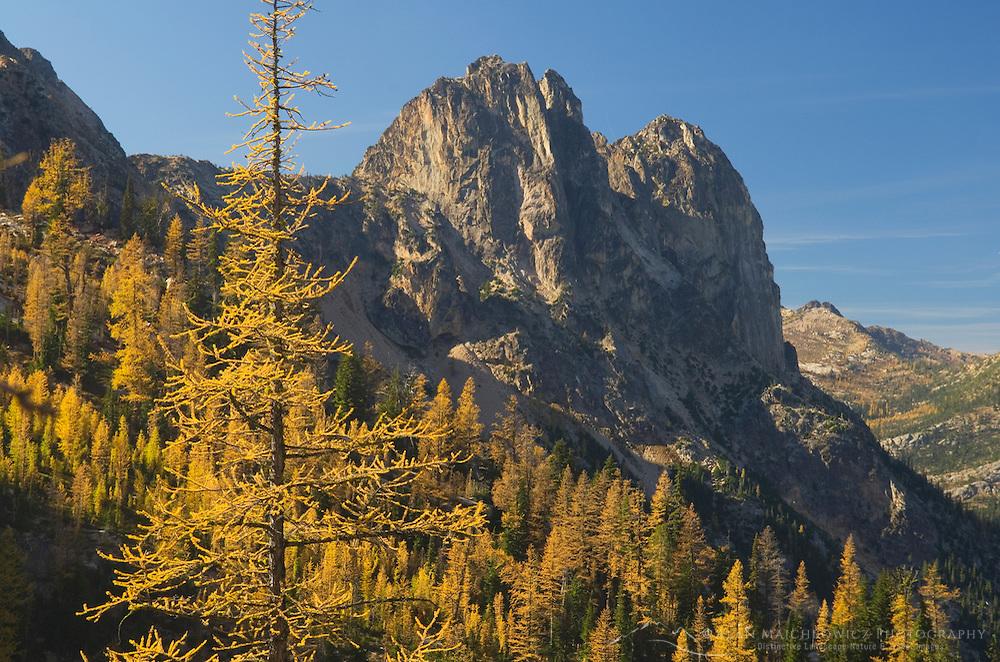 Early Winters Spires and Subalpine Larch (Larix lyallii) in autumn, North Cascades Washington