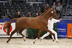 563 - Generation SJ<br /> KWPN Stallion Selection - 's Hertogenbosch 2014<br /> © Dirk Caremans