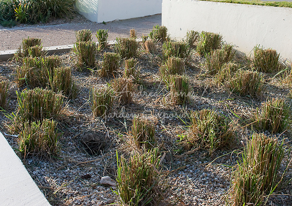 De La Warr Pavilion at Bexhill-on-Sea<br /> Planting designs by Noel Kingsbury<br /> Landscaping by HTA