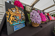 Eagle Sweet Peas by royal appointment - Preparations for the Hampton Court Flower Show, organised by teh Royal Horticultural Society (RHS). In the grounds of the Hampton Court Palace, London  02 July 2017
