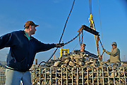 Men hoist cage full of oysters from the Delaware Bay at BiValve, New Jersey