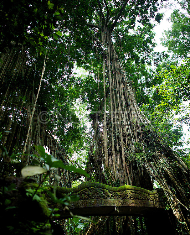 A bridge in the jungle of the Monkey Forest in Ubud. &copy;Ingetje Tadros<br />