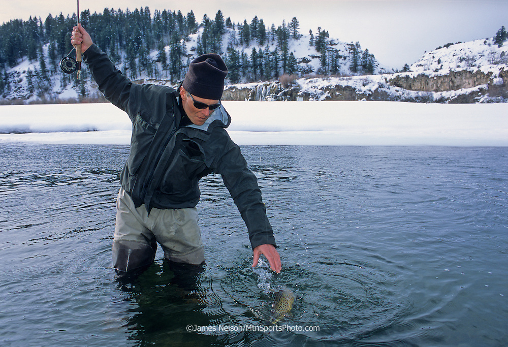 08741-D. A fly fisherman brings a brown trout to hand during a winter day on the South Fork of the Snake River, Idaho.
