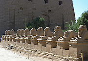 Line of ram-headed sphinxes, temple of Rameses II, The Great (1304-1237 BC) Karnak, Ancient Egypt