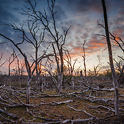 Dead trees on the ground from drought winds in South Texas at sunrise.