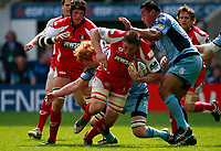 Photo: Richard Lane/Richard Lane Photography. Gloucester Rugby v Cardiff Blues. Anglo Welsh EDF Energy Cup Final. 18/04/2009. Gloucester's Gareth Delve is tackled by Blues' Paul Tito and Taufa'ao Filise.