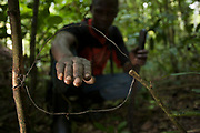 Andi Dominic, member of the snare removal team at BCFS showing a snare set for medium-sized duikers and bush pig in the rainforest.  Budongo Forest Reserve, Masindi, Uganda, Africa.