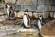 Pinguine Luisenpark