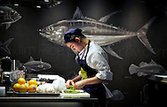 Copyright JIm Rice © 2013<br />  Chef, Sydney fish markets.<br /> Seafood challenge competition