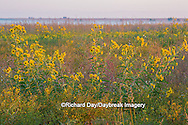 63863-02513 Wildflowers at Prairie Ridge State Natural Area, Marion Co., IL