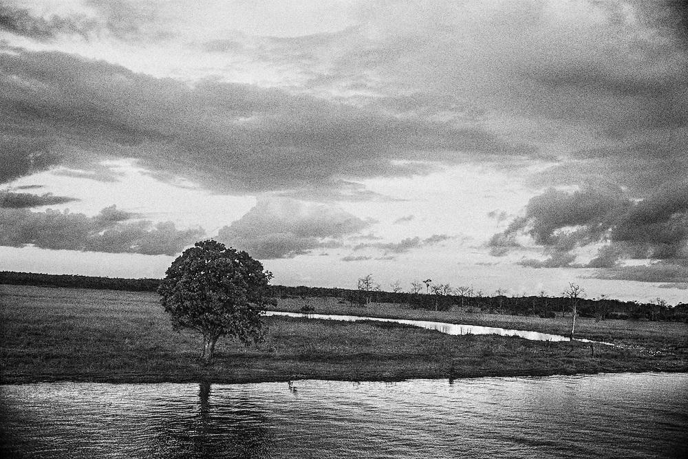 Brazil, rio branco, amazonas.<br /> <br /> La faillite de l'agriculture sur des sols peu fertiles a deja pousse les colons a se recycler dans l'orpaillage. A present, l'elevage bovin et la culture de soja se developpent de fa&ccedil;on extensive, accelerant la deforestation.
