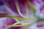 Impressionistic macro abstract of flower