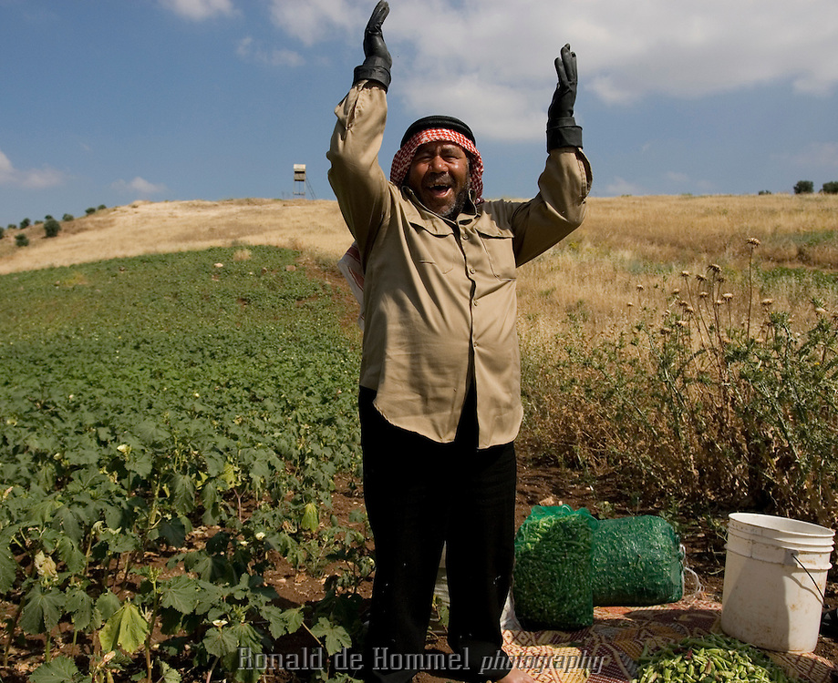 "This Jordanian farmer grows okra on the hills facing the Golan. His only water resource is rain or ""Allah's will"" to his saying, Jordan."