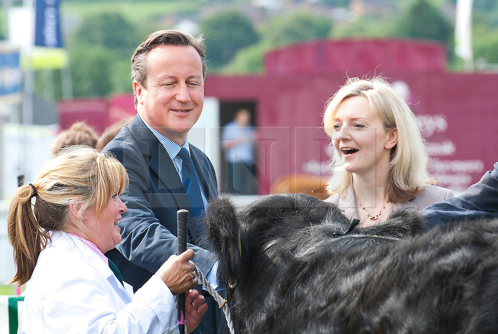 © Licensed to London News Pictures. 21/07/2014. Llanelwedd, UK. David Cameron and Liz Truss - newly appointed Secretary of State for Environment, Food and Rural Affairs  visit the cattle ring at the show.  A record numbers of visitors in excess of 240,000 are expected this week over the four day period of Europeís largest agricultural show. Livestock classes and special awards have attracted 8,000 plus entries, 670 more than last year. The first ever Royal Welsh Show was at Aberystwyth in 1904 and attracted 442 livestock entries. Photo credit: Graham M. Lawrence/LNP