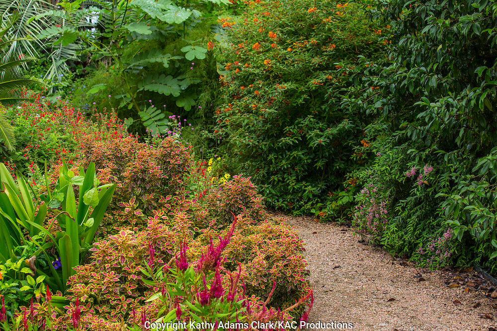 Garden, coleus, salvia, garden path, Houston, late summer, Texas.