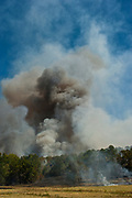 A gigantic smoke plume raises over trees at a fire near CR2301 and FM 850 in Smith County on Thursday. East Texas continues to suffer a record drought and its fifth consecutive day of wildfires.© 2011 Jaime R. Carrero/Tyler Morning Telegraph