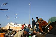 Morocco, Essaouira, fishermen port, Port de peche