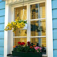 Europe, Scandinavia, Finland, Porvoo. Flowers populate windows and windowsills in homes of Porvoo, Finland.