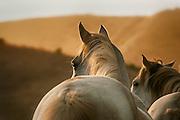 Wild Horse, California