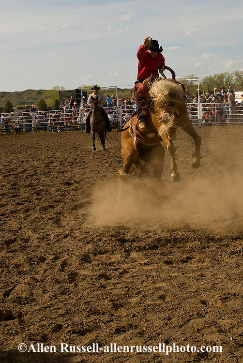 Rodeo, Saddle Bronc rider, Miles City Bucking Horse Sale, Montana, <br /> MODEL RELEASED on rider &amp; pickup man only