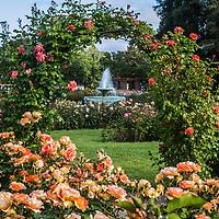 Rose Garden 2017