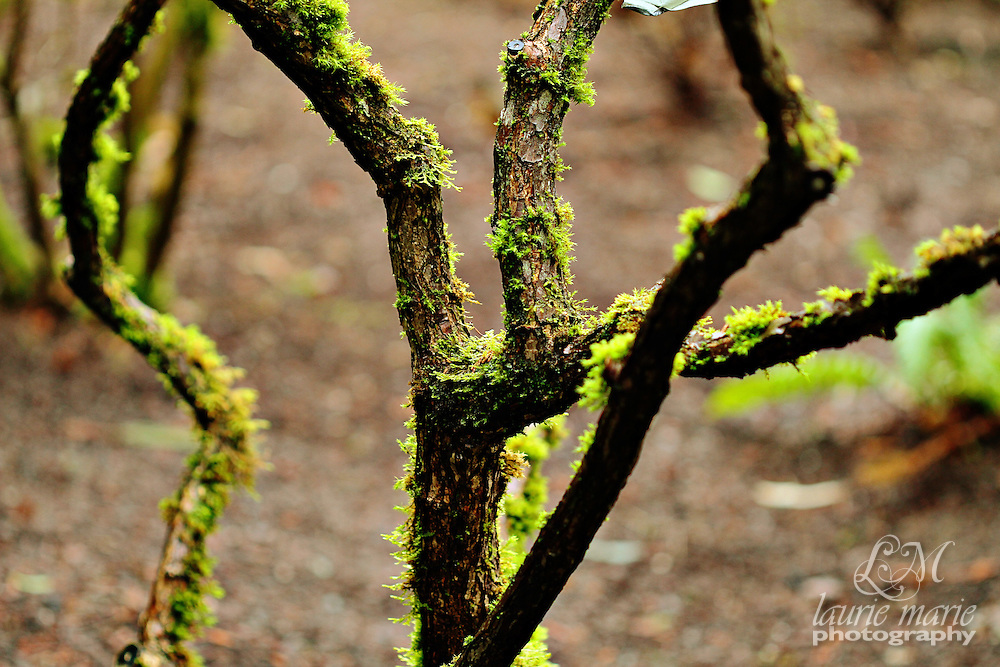 Mossy tree trunks and branches