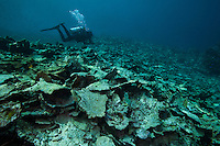 Diver observing reef destroyed by fish bomb..Shot In Indonesia