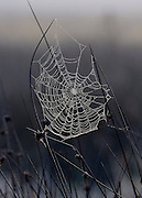 © Licensed to London News Pictures. 14/10/2012. Richmond, UK A frosty spiders web. Early mooring mist and sunshine in Richmond Park, Surrey, today 14th October 2012. Photo credit : Stephen Simpson/LNP