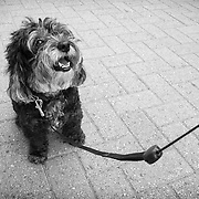 STREET PHOTOGRAPHY - DOGS