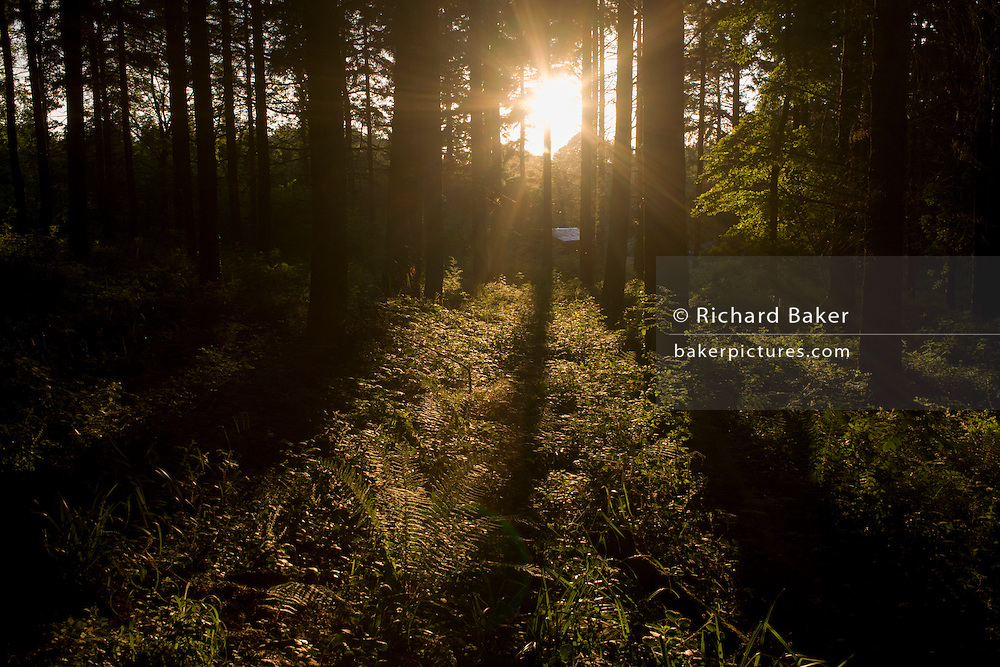Summer sunshine in woodland in North Somerset, UK.