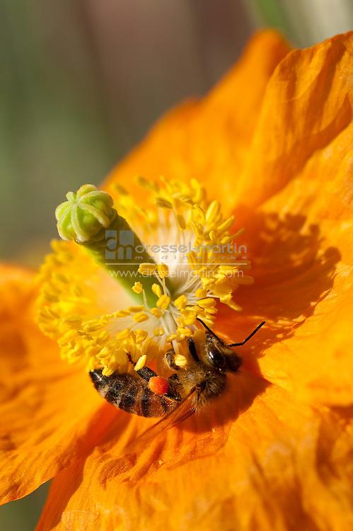 Roads Watersmart Garden, bees, pollinator