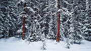 Winter in Jasper National Park, Dec 2013