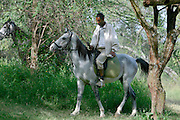 LAKE LANGANO, RIFT VALLEY, SHEWA/ETHIOPIA..Horses at Bishangari Lodge..(Photo by Heimo Aga)