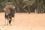 Fisherman carrying ropes on his head on a beach near Aflao.