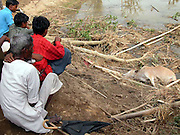 Villagers look at a dead cow and uprooted trees at Patangitola village, about 300 kilometers (186 miles) from Gauhati, capital of northeastern Indian state of Assam, Wednesday, April 23, 2003. A cyclone swept through Assam state, killing at least 36 people and injuring 1.500 others, police said Wednesday. (AP Photo/Shib Shankar Chatterjee)