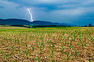 Lightning strikes, signaling a coming storm at Schrack Dairy Farm in Loganton, Pa., on June 11, 2015. Owner Jim Harbach practices no-till farming and other sustainable efforts to improve soil quality on the farm that has been in his wife's family for 12 generations, since 1773. (Photo by Will Parson/Chesapeake Bay Program)