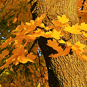 """Focus on Yellow""<br />