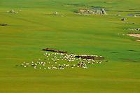 Mongolie, Arkhangai, la vallee de la Steppe Jaune // Mongolia, Arkhangai, Yellow Steppe valley
