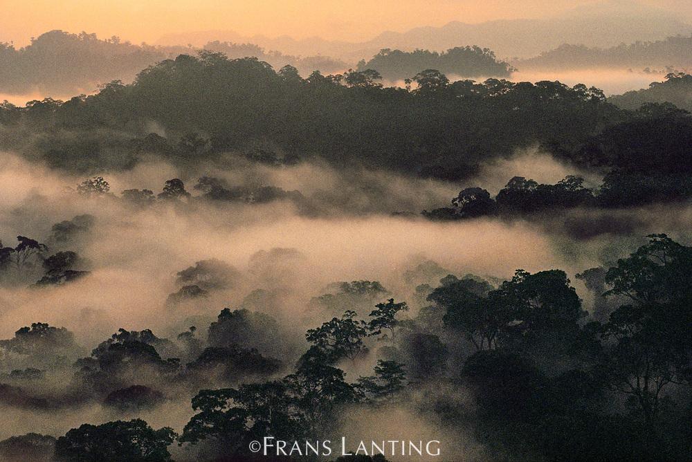 Lowland rainforest, Danum Valley Conservation Area, Borneo