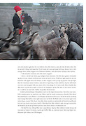 Ten pages about southsami reindeer herding in the norwegian mountains of Sylan, the 2010 yearbook, the Norwegian Trekking Organization (DNT).