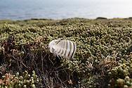 Saunders Island, Falkland Islands, Great Britain