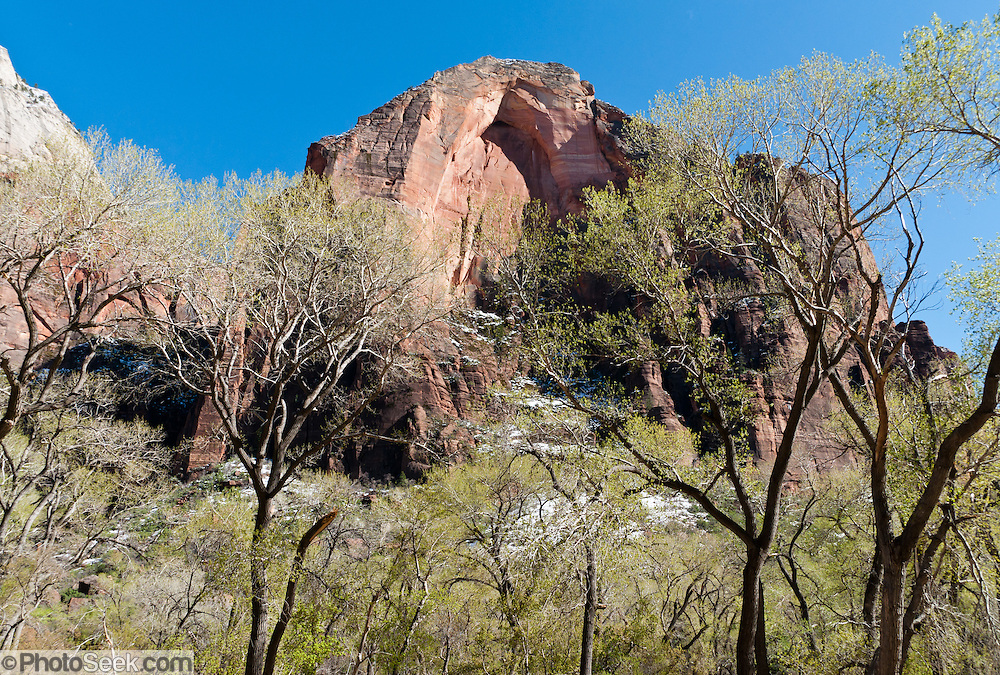The North Fork of the Virgin River cut Zion Canyon through reddish and tan-colored Navajo Sandstone, in Zion National Park. Springdale, Utah, USA. Uplift associated with the creation of the Colorado Plateaus lifted the region 10,000 feet (3000 m) starting 13 million years ago. Zion and Kolob canyon geology includes 9 formations covering 150 million years of mostly Mesozoic-aged sedimentation, from warm, shallow seas, streams, lakes, vast deserts, and dry near-shore environments. Mormons discovered the canyon in 1858 and settled in the early 1860s. U.S. President Taft declared it Mukuntuweap National Monument in 1909. In 1918, the name changed to Zion (an ancient Hebrew name for Jerusalem), which became a National Park in 1919. The Kolob section (a 1937 National Monument) was added to Zion National Park in 1956. Unusually diverse plants and animals congregate here where the Colorado Plateau, Great Basin, and Mojave Desert meet.