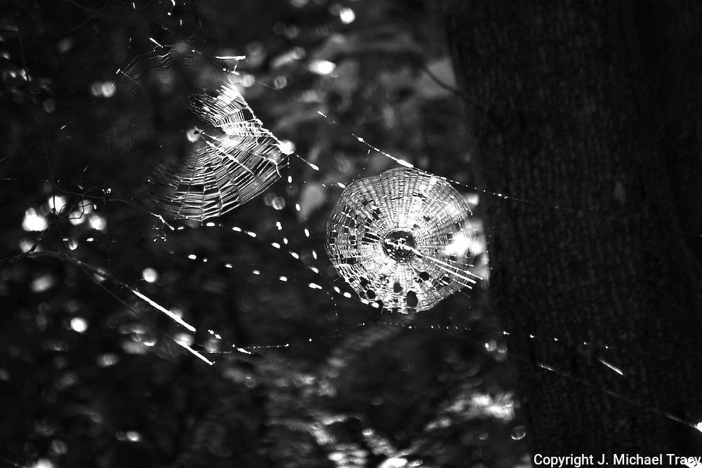 Dual spider webs, monochrome