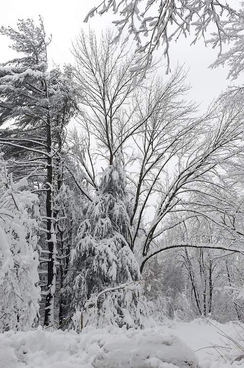 Snowmageddon one of the worst blizzards in history occurred on February 25-26, 2010. Three feet of snow and wind gusts of 40 mph downed power lines, felled trees, and caused whiteouts in Chappaqua in suburban Westchester County, New York and across the region.