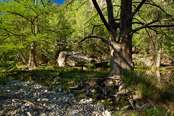 Stock photo of a shady wooded area along a small river in the Texas Hill Country