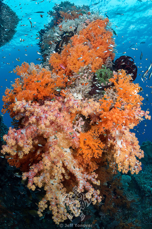 Reef fish congregate around a Soft Coral encrusted pillar<br /> <br /> Shot in Raja Ampat Marine Protected Area West Papua Province, Indonesia