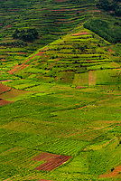 Steep terraced farming in the mountainous regon of Kabale District, Uganda.