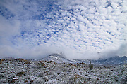 Snow blankets the Sonoran Desert, Santa Catalina Mountains, Mount Lemmon, Tucson, Arizona, USA.