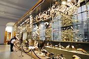 Hessisches Landesmuseum Darmstadt, Abteilung Zoologie, Darmstadt, Hessen, Deutschland | Museum Darmstadt, Hesse, Germany